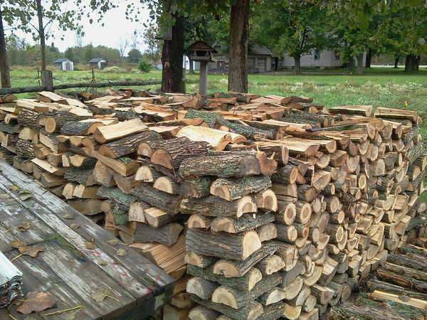 Oak ash and alder firewood of best grade