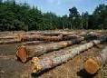 Commercio di legno illegale: Kenya, Tanzania e Uganda uniti per combatterlo