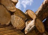 Italia in ritardo in lotta contro import legno illegale