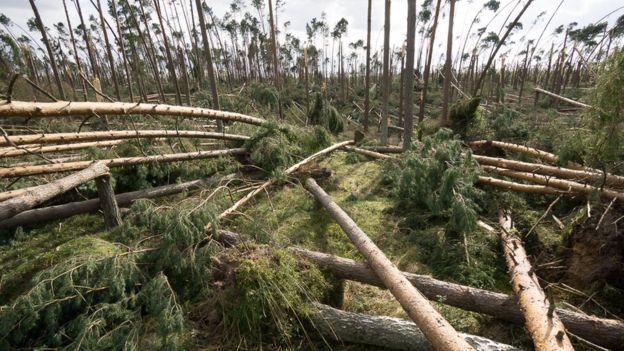 8,2 million cubic meters of wood from the 45,000 hectares were torn apart by storms in Poland