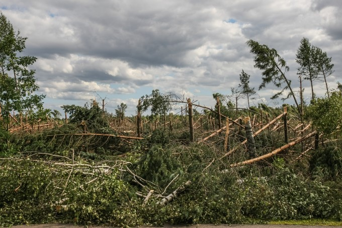 The storms have destroyed entire forests in Romania and in northeast Europe