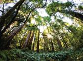 Subvenciones para empresas forestales