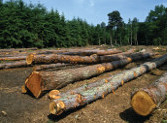 China`s huge demand for timber is stripping one of the world`s largest remaining areas of pristine tropical forests