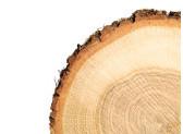 Birch Wood Market
