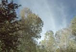 Az erdő rejtélyei dokumentumfilm ünnepli Az Erdő Nemzetközi Évét