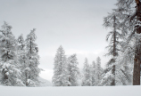"""Jahr des Waldes: Neuer Dokumentarfilm """"Das Geheimnis unseres Waldes"""""""
