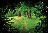 Lettország erdő kerete